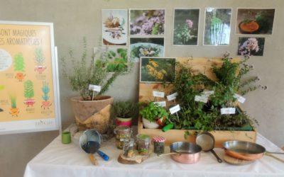 Les saveurs uniques des herbes aromatiques