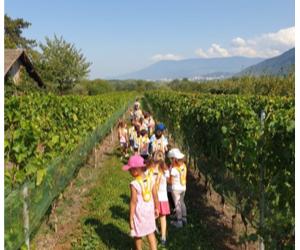 Les 2PA à la découverte de la vigne et du raisin